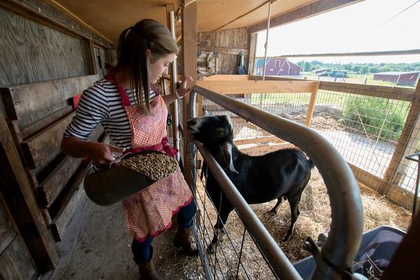 Erin Bligh of Dancing Goat Dairy feed her goat Noah at the Tendercrop Farm in Newbury.