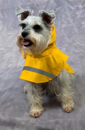 Abby models a Small Gardian Gear Rain Jacket , retails $19.99