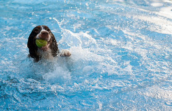 One of Maura Doyles dogs Matilda retrieves a ball from the water.