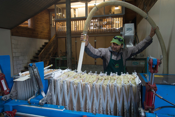Grigore Chipas fill a compressing machine with apple mash from a compressing machine at Cider Hill Farm in Amesbury.Chipas has been working at the Farm for 19 years.