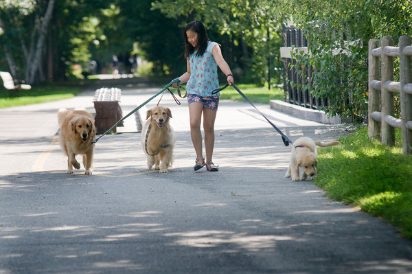 Anna Cameron with her dogs Sunny, Sizzle and Sam on the Rail Trail in newburyport.