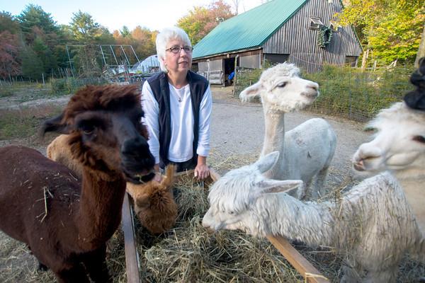 Olivia Sanderson and her alpacas at  Parker River Alpacas