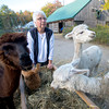 Olivia Sanderson and her alpacas at  Parker River Alpacas
