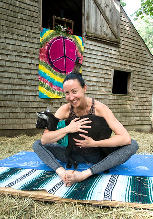 JIM VAIKNORAS/Staff photo Briana Grieco holds Norman at Moon Shadow Goat Yoga in Boxford..
