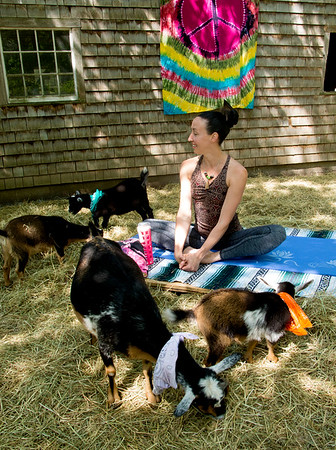 JIM VAIKNORAS/Staff photo Briana Grieco with some of the goats at Moon Shadow Goat Yoga in Boxford.