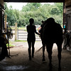 JIM VAIKNORAS/Staff photo Anna Behrens walks her horse out of the barn before a polo class at Stage Hill Farm in Newbury.