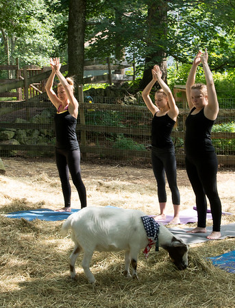 JIM VAIKNORAS/Staff photo Anmarie Cote along with her daughters , Katarina, 15, and Cara,18  of Boxford during Moon Shadow Goat Yoga in Boxford Sunday.