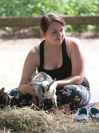 JIM VAIKNORAS/Staff photo Alexandra Lamoureiux holds on on the goats during a class at Moon Shadow Goat Yoga in Boxford.