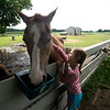 JIM VAIKNORAS/Staff photo Logan Sansone pets Sukey the quarter horse at the Spencer-Peirce-Little Farm Little Farmer Camp.