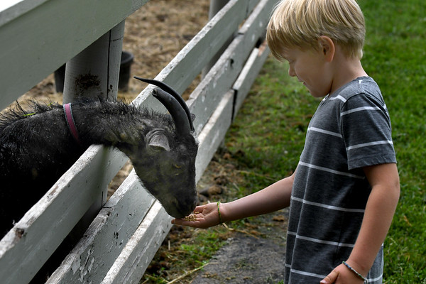 JIM VAIKNORAS/Staff photo Griffin Dardinski feeds one of the goats at the Spencer-Peirce-Little Farm during the Little Farmers Camp.