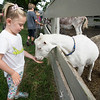 JIM VAIKNORAS/Staff photo Lilly Seabolt feed one of the goat at the Spencer-Peirce-Little Farm Little Farmer Camp.
