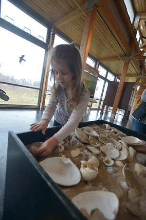 JIM VAIKNORAS photo Katherine Hale, 5, arranges shells at the Parker River Earth Day Festival.