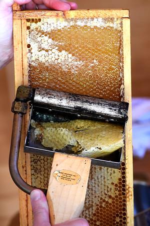 NBPT_JVA_Bees 12.jpg