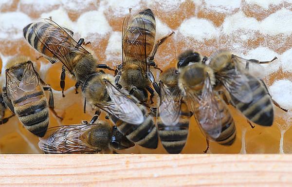NBPT_JVA_Bees 7.jpg