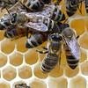 NBPT_JVA_Bees 6.jpg