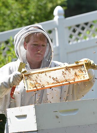 NBPT_JVA_Bees 8.jpg