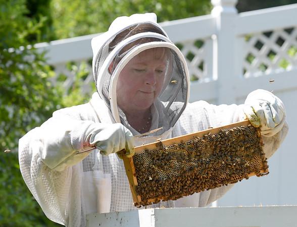 NBPT_JVA_Bees 11.jpg
