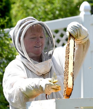 NBPT_JVA_Bees 10.jpg