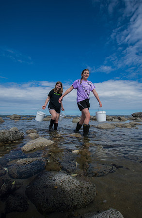 Molly McElaney of Amesbury and Morgan Fox,13, of North Andover carry buckets of sea creatures through the tidal pool on Sandy Point on Plum Island.