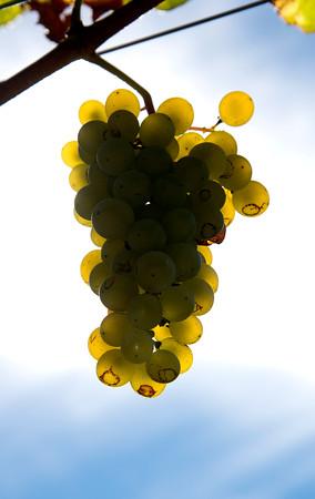 JIM VAIKNORAS/Staff photo<br /> <br /> Mill River Winery
