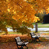 JIM VAIKNORAS/Staff photo <br /> Leaves fall on benches at Atkinson Common
