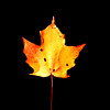 JIM VAIKNORAS/Staff photo <br /> A fallen maple leaf floats in the fountain pond at Atkinson Common.