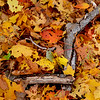 JIM VAIKNORAS/Staff photo <br /> A pile of falled leaves at Maudslay State Park in Newburyport.