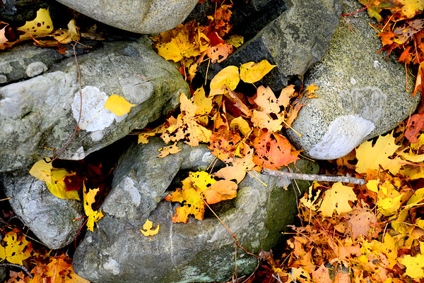 JIM VAIKNORAS/Staff photo <br /> Fallen leaves amount a crumbled stone wall near the lower green in Newbury.