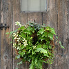 BRYAN EATON/Staff photo. Ferns and begonias on his rustic front door.