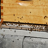 BRYAN EATON/Staff photo. Doug keeps bees for pollination.