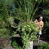 BRYAN EATON/Staff photo. Below a King Tut papyrus, Doug picks off dead blooms of petunias and other annuals.