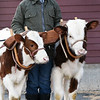 BRYAN EATON/Staff photo. Eli Bartlett with his new oxen team, Twain, left, and Mark. He has participated in many oxen contests at fairs throughout New England last summer with an older team.