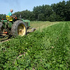 BRYAN EATON/Staff photo. Robbie Bartlett harvests green beans.
