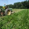BRYAN EATON/Staff photo. Robbie Bartlett harvests green beans.