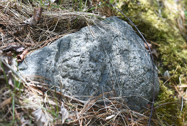 BRYAN EATON/Staff photo. A rock Santos thought had some kind of human-made markings on it.