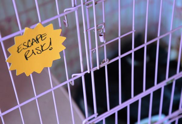 JIM VAIKNORAS/Staff photo Sign on kittens cage.