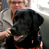 JIM VAIKNORAS/Staff photo Volunteers Anne Tuthill and her dog Skye at the Anna Jaques Hospital