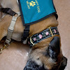 JIM VAIKNORAS/Staff photo Therapy dog Micah takes a break in 2 North at the at the Anna Jaques Hospital.
