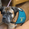 JIM VAIKNORAS/Staff photo Therapy dog Micah in 2 North at the at the Anna Jaques Hospital.