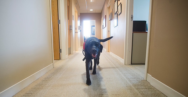 JIM VAIKNORAS/Staff photo Lucy makes her rounds at the Anna Jaques Cancer Center..