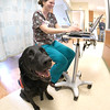 JIM VAIKNORAS/Staff photo Lucy visits registered nurse Michelle Petryk in the Anna Jaques Cancer Center at the Anna Jaques Hospital.