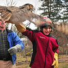 Sam Aponas, 13, of Byfield ducks as he releases a flapping great horned owl back to the wild yesterday afternoon as his father, Sam, right, takes photos. His neighbor, former Triton teacher and biologist Dave Taylor, left, was brought the owl, which was injured on Interstate 95 and rehabilitated. Bryan Eaton/Staff Photo January 10 2012