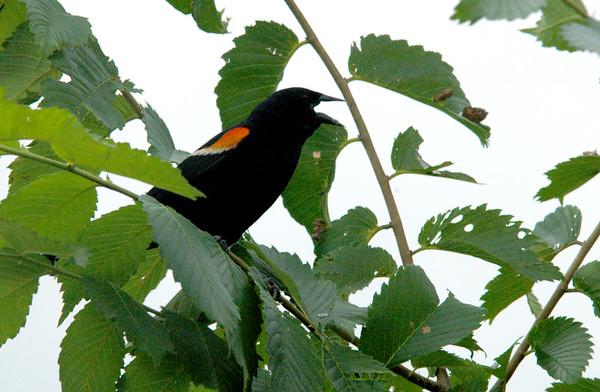 060706_ND_JVA_BIRDS_2