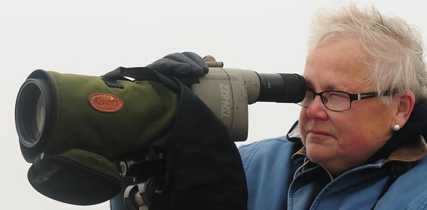 JIM VAIKNORAS/Staff photo Sue McGrath usesa spotting scope at the Parker River Wildlife refuge