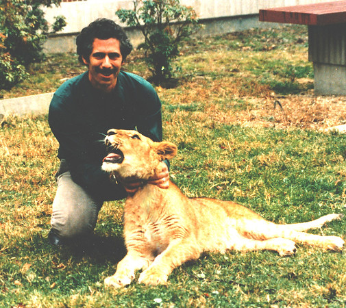 Dave taylor at Triton with a lion he took care of for a few days in the early 1970's