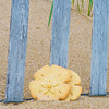JIM VAIKNORAS/Staff photo  Plum Island Cookie Company sand dollar cookie on the beach on Plum Island.