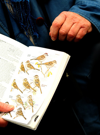 JIM VAIKNORAS/Staff photo Sue McGrath uses a book to help identify birds at the Oak Hill Cemetary in Newburyport.