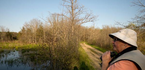 JIM VAIKNORAS/Staff photo  Sue McGrath looks for birds at Pikes Bridge Road in West Newbury.
