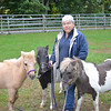JIM VAIKNORAS/Staff photo Carol Larocque with Perri, Blue Knight and Flower at her Newbury Farm.