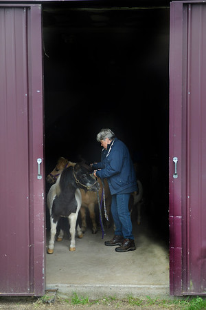 JIM VAIKNORAS/Staff photo Carol Larocque with Perri and Blue Knight at her Newbury Farm.